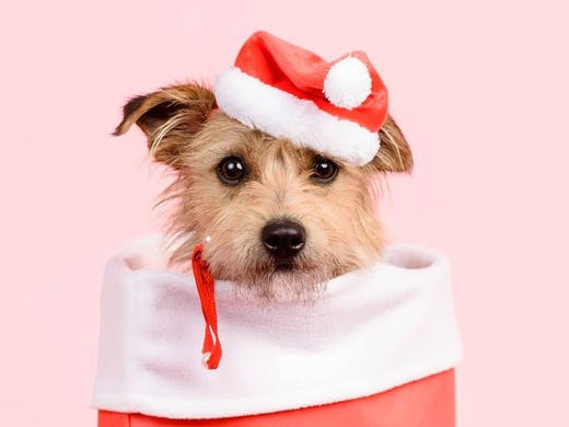A Puppy For Christmas.There S A Puppy Christmas Portrait Pop Up Today Melbourne