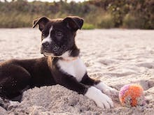 Let The Dogs Out, Here's 7 Dog-Friendly Beaches Near Brisbane To Cool Off At
