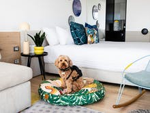 Pack The Dog Toys, This Luxe Hotel Is Now Offering Puppy-Friendly Stays