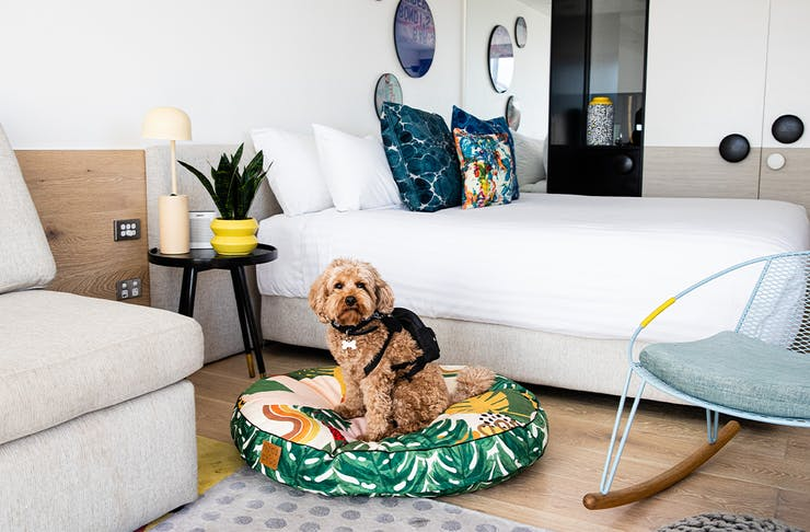 a dog sitting on a dog bed in a hotel room