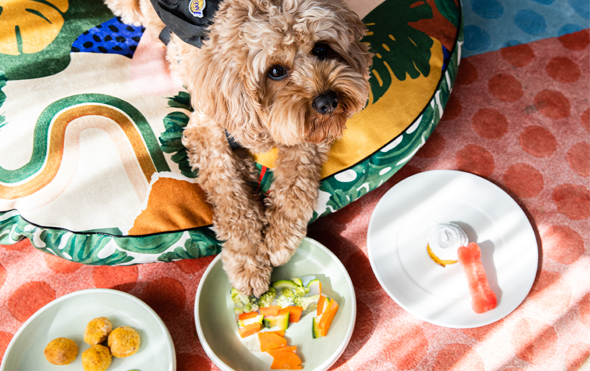 a cute dog with three plates of food in front of him