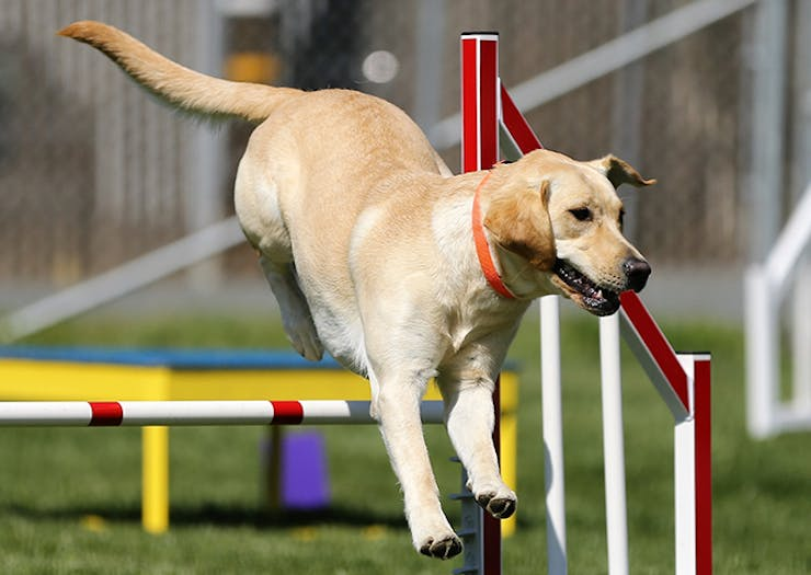 A Sports Academy For Dogs Exists In Perth And We Can't Deal