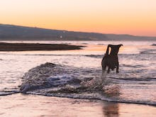 Soak Up The Sunshine With Your Pup At 5 Of The Gold Coast's Dog-Friendly Beaches