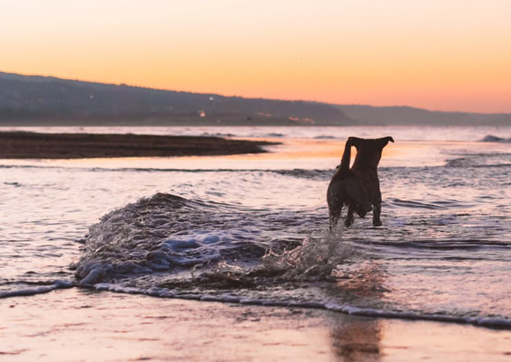 Grab Your Furry Pal, These Are 5 Of The Best Dog-Friendly Walks On The Sunshine Coast