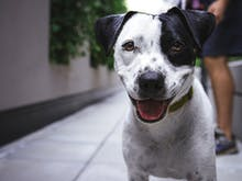 Where To Adopt A Dog In Auckland And Save A Life Today