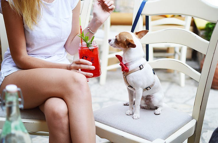 A woman sits next to a little dog wearing a red bow tie