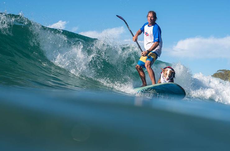 dog-surfing-sunshine-coast