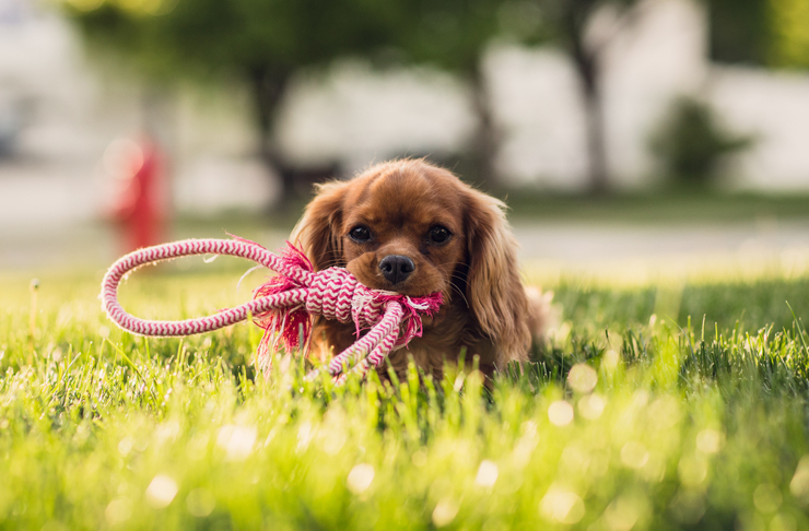 The Best Places You Can Adopt Animals On The Sunshine Coast