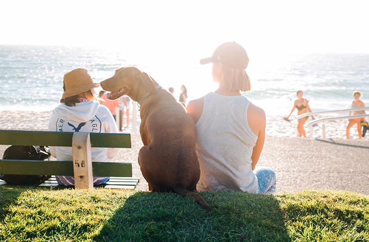 dog-park-sunshine-coast
