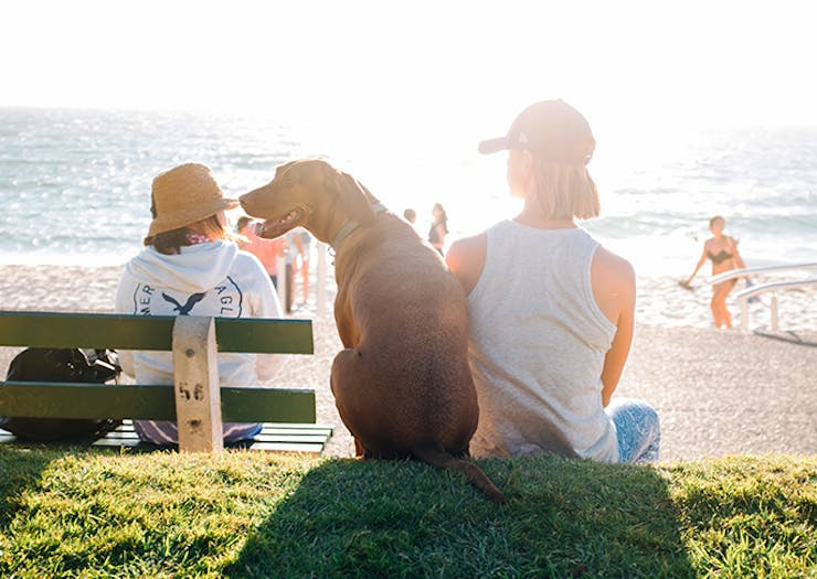 The Best Pet-Friendly Accommodation On The Sunshine Coast