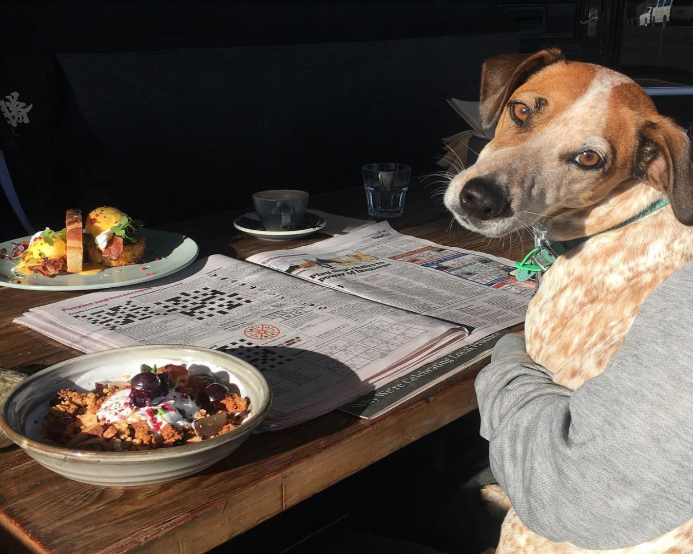 Dog sitting at an outdoor table with breakfast and coffee at Dear Jervois