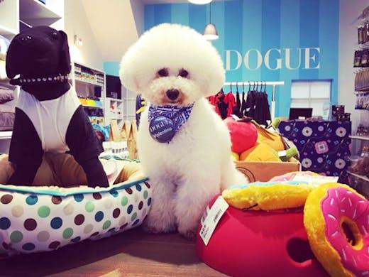 dogue-brighton