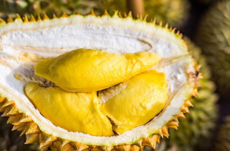 durian-melbourne-festival