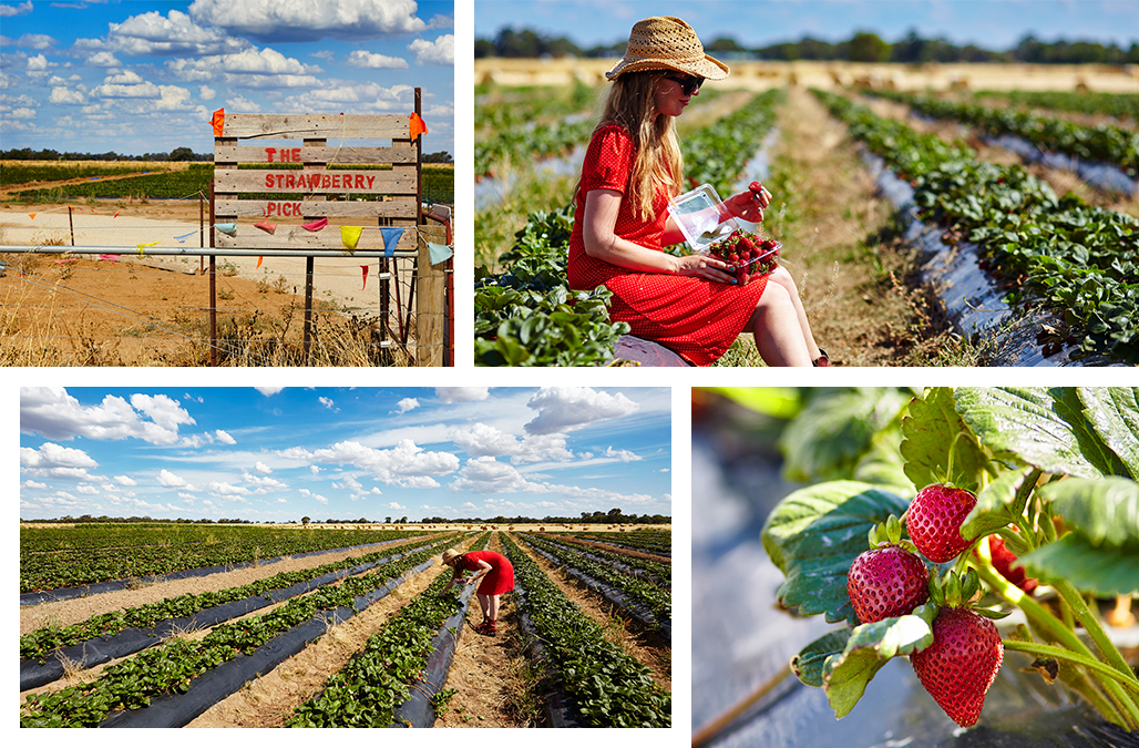 Visit Victoria_echuca_strawberries