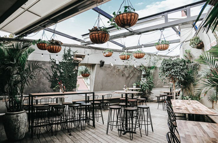 The leafy rooftop bar, called Elm Rooftop, at The Taphouse in Sydney.