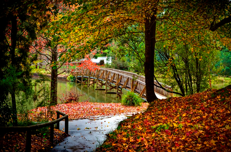 A charming lake with an old wooden bridge running over it.