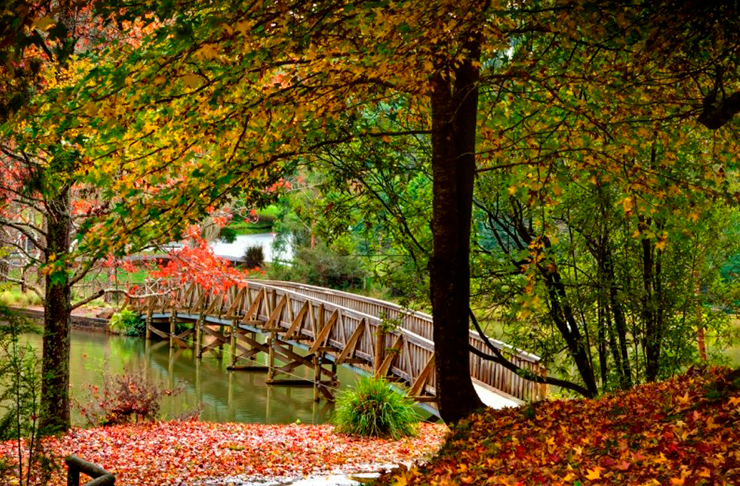 The wooden bridge at Emerald Lake park in Autumn.