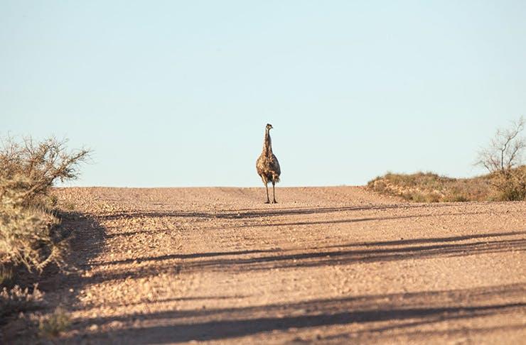 emu-egg-food-trend