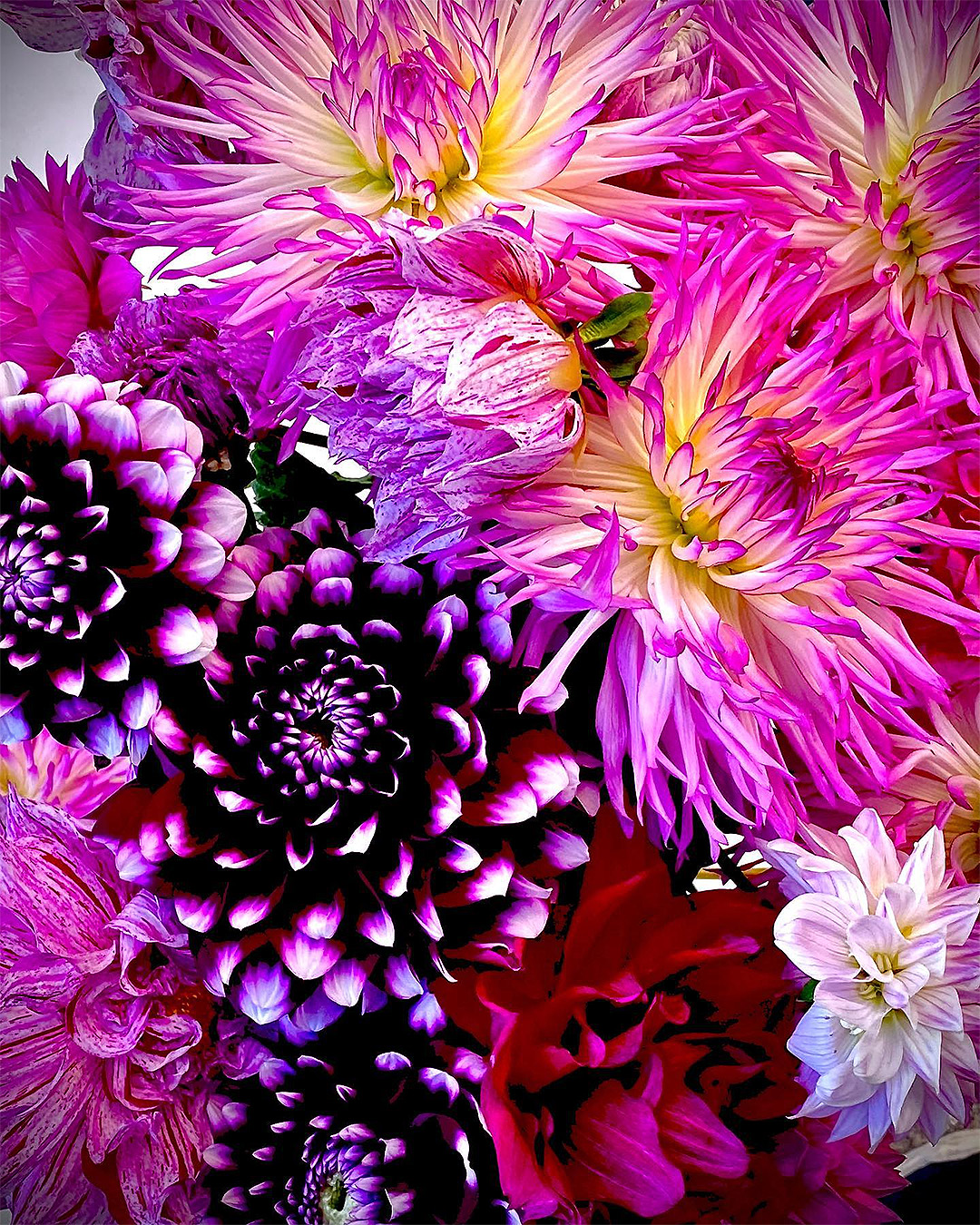 Wonderful purple flowers from Enchanted Rose Flowers.