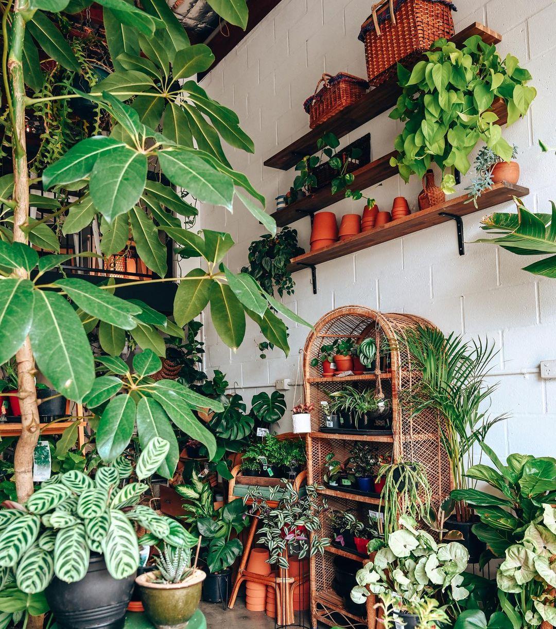 a shop full of plants