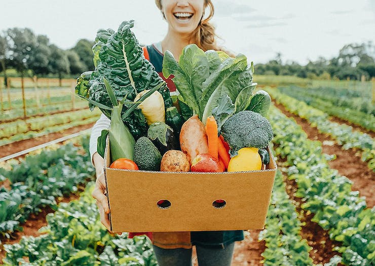 Order Online With 8 Auckland Businesses Who Deliver Groceries To Your Door