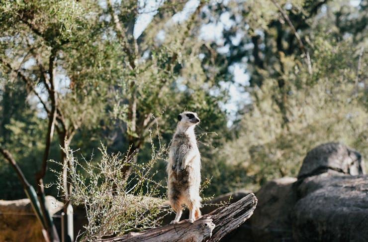 fauna-podcast-melbourne-zoo