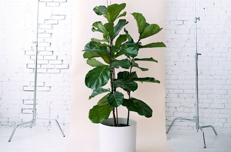 8 Super Cute Indoor Plants To Buy Now | Brisbane | The Urban List on house plants design, house plants books, house plants outdoors, house plants food, house plants house, house plants that clean the air, house plants flowers, house plants low light, house plants guide, house plants dogs, house plants gifts, house plants pets, house plants care, house plants with long green leaves, house plants blog,