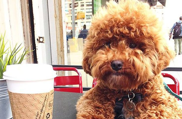 These Auckland Cafes Are Getting Free Dog Menus!