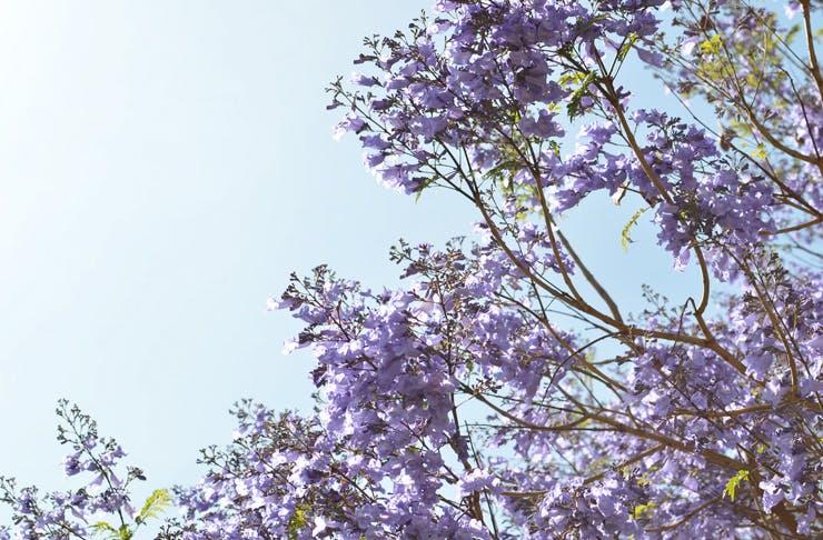 free-tree-giveaway-sydney