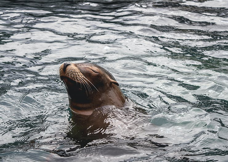 Check Out Footage Of A Seal Catching Its Breakfast In The Yarra River Earlier This Morning