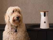 Finally, The Furbo Dog Camera Is Now Available In Australia