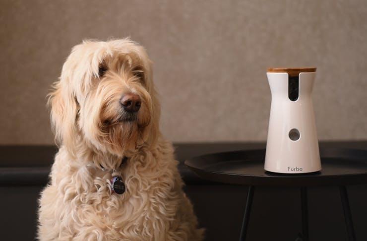 furbo-dog-camera-australia