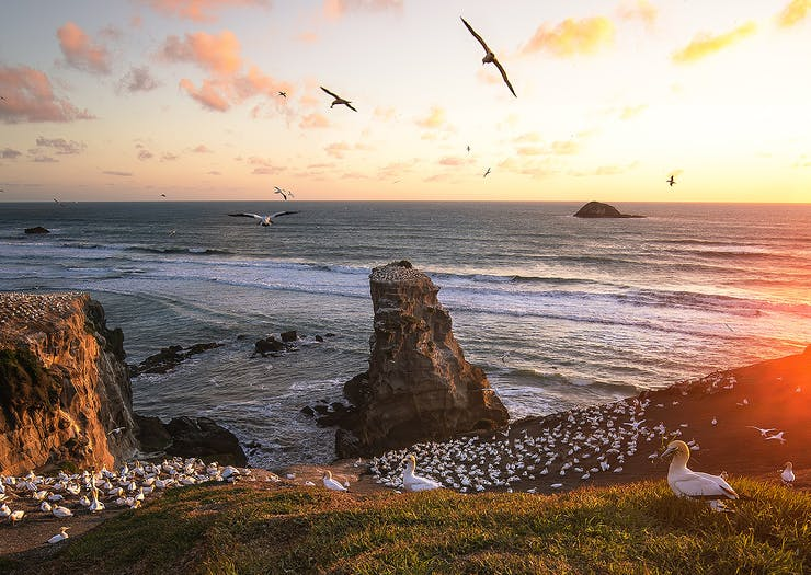 50 Of The Best Free Things To Do In Auckland
