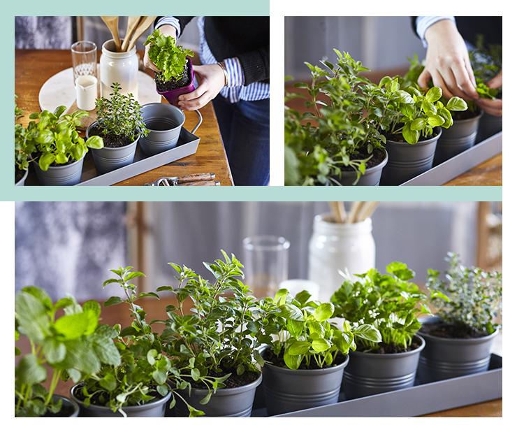 Garden of Eden Herbs