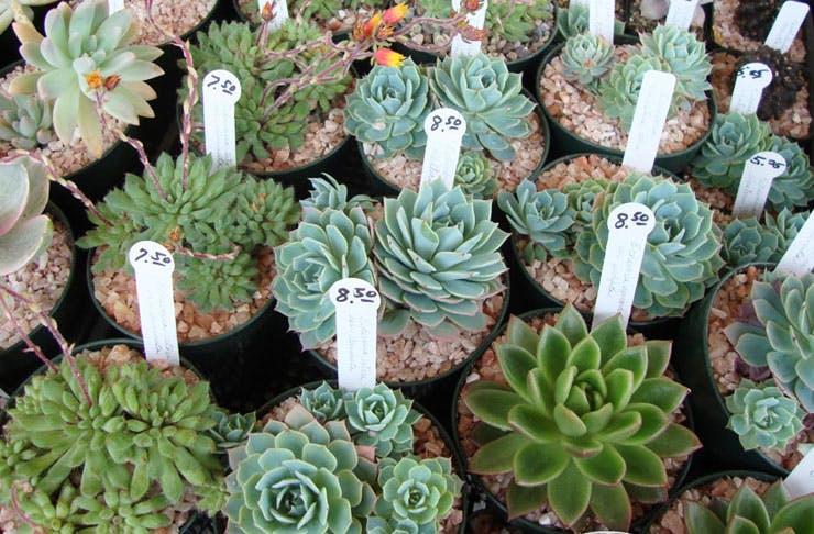 giant plant sale sydney