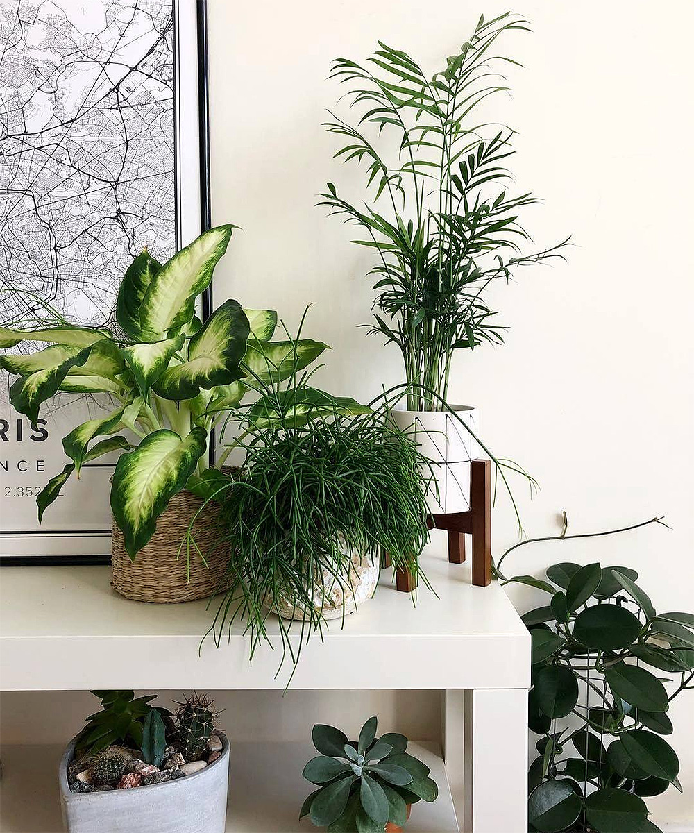 Beautiful plants in an apartment.