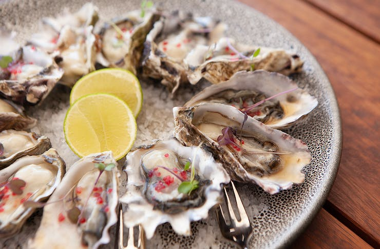 Delicious looking oysters on a plate at Good George North Wharf.