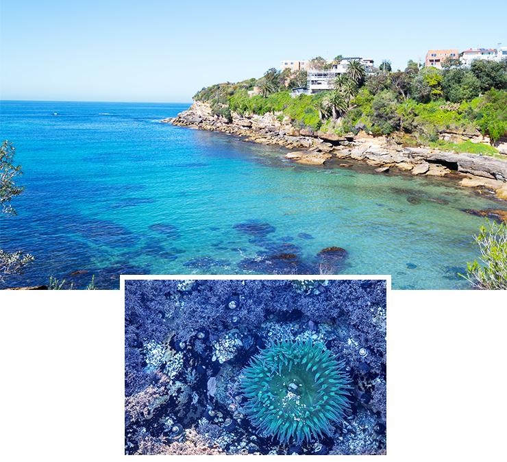 best spots to snorkel in sydney
