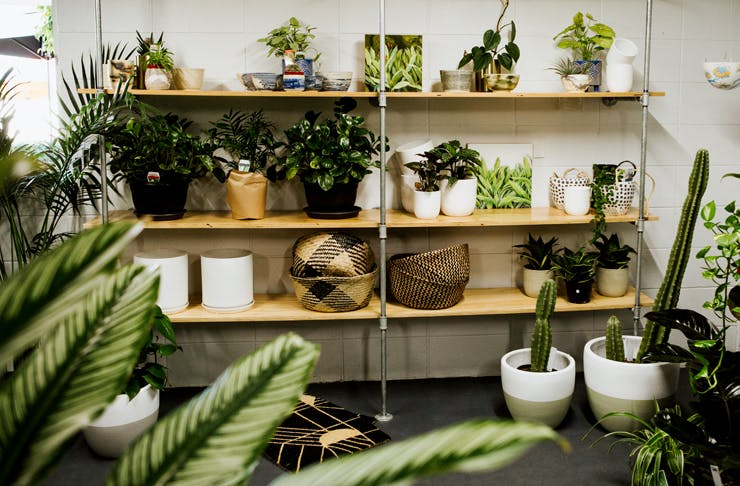 green-collective-the-urban-list