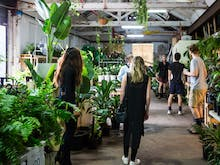 Melbourne's Massive Indoor Plant Sale Is Back This Weekend
