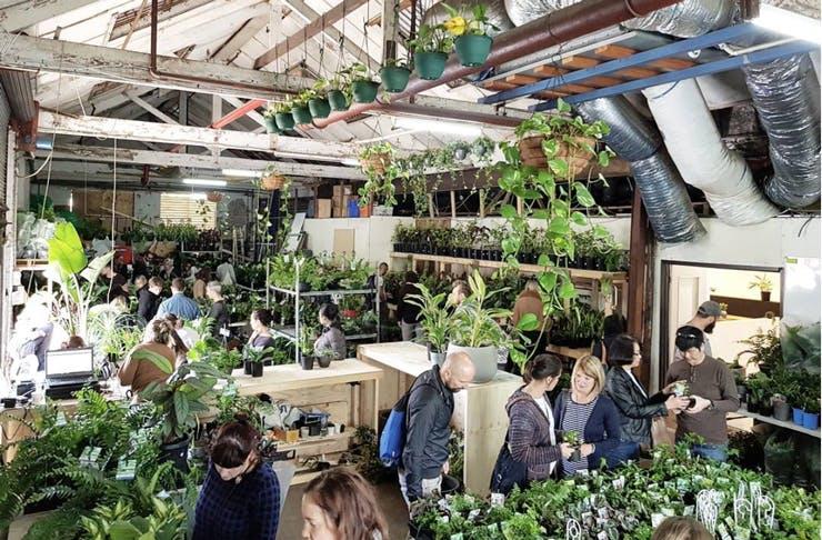 greener-house-warehouse-sale-november-2017