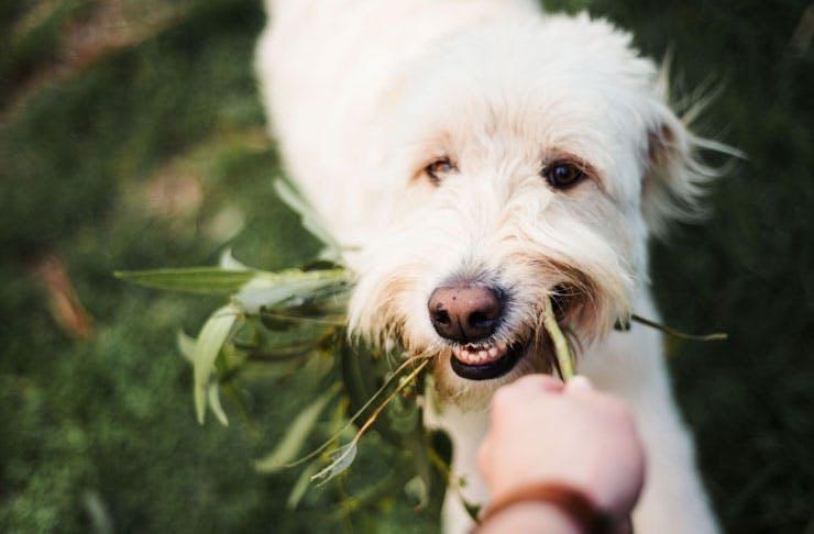 greenfields-albert-park-dog-degustation