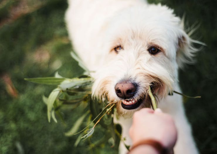 An Albert Park Cafe Is Launching A Degustation Specifically For Dogs