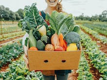 Order Online With 15 Brisbane Businesses Who Deliver Groceries To Your Door