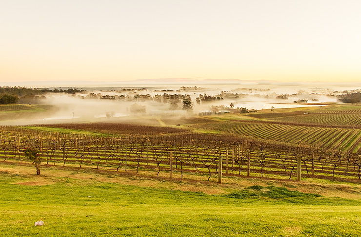 hunter-valley
