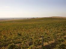Sip Your Way Through Central Victoria's Sprawling Wine Region