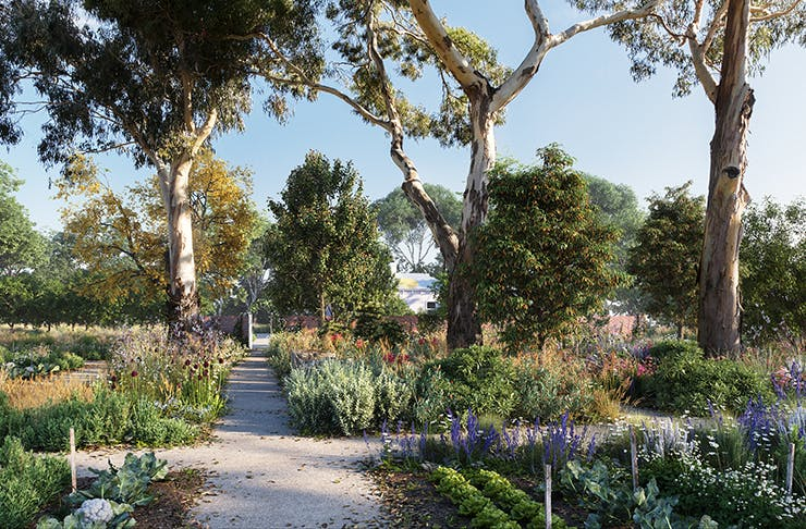 The beautiful gardens surrounded by gumtrees at Heide museum.