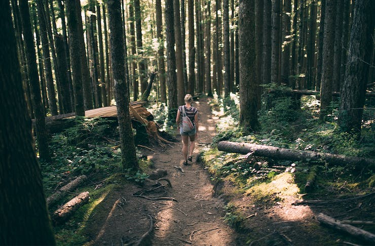 A woman on a walking trail through a forest of trees.