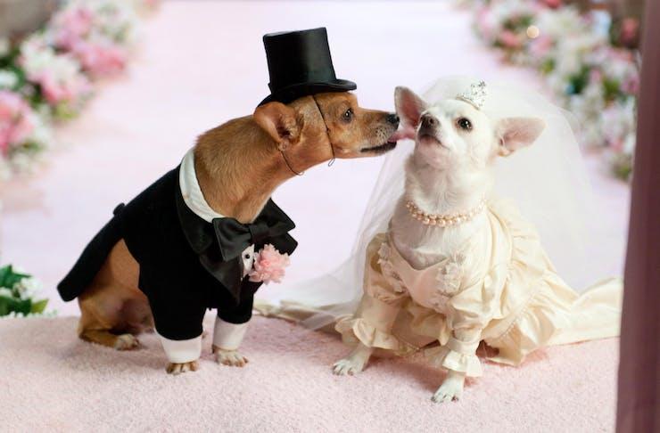 dog wedding melbourne