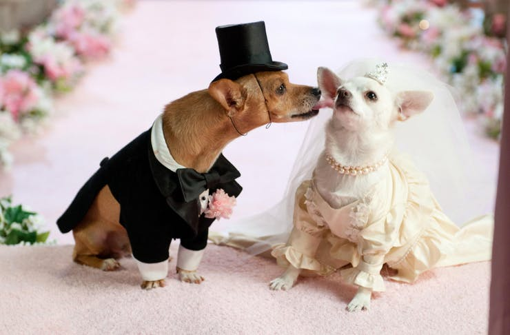 dog wedding melbourne